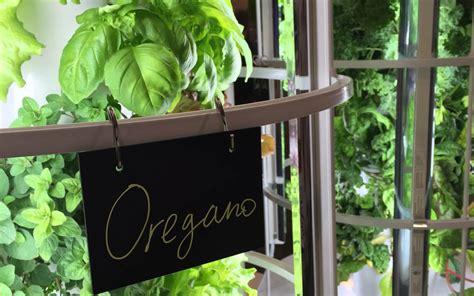growing herbs inside the ultimate indoor herb garden how to reap huge harvests