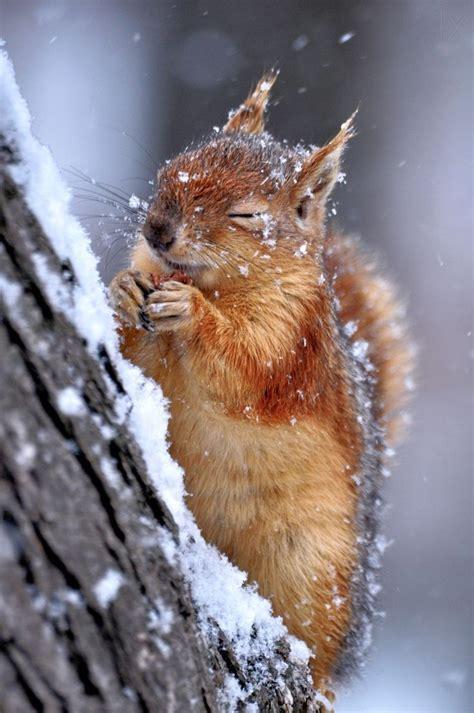 animals in the winter follow us on instagram dear blackbird boutique www
