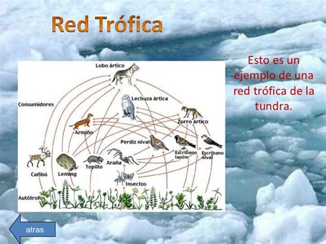 cadena trofica tundra tundra pg sdh jg