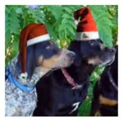 dogs barking jingle bells jingle bells jingle bells daily plate of