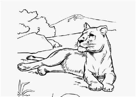 female lion coloring coloring pages