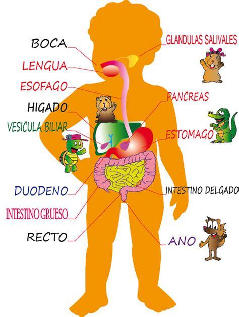imagenes del sistema digestivo dibujo didy presenta quot cuidando la salud oral de los ni 241 os quot