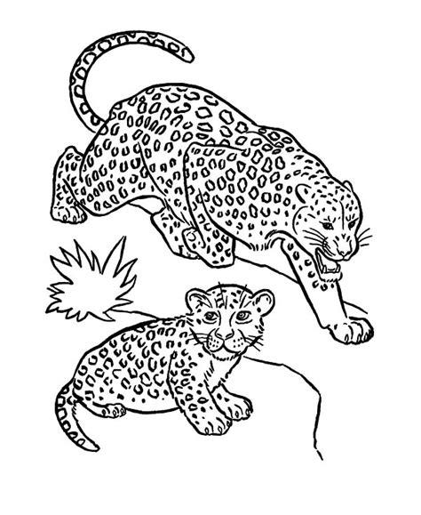 cheetah head coloring page sleepy head leopard coloring pages batch coloring