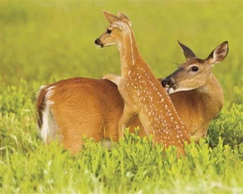 faon de parler 2 1444181246 les animaux et leurs b 233 b 233 s 192 d 233 couvrir