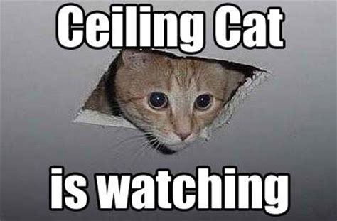 Popular Cat Memes - 10 of the web s most popular cat memes mnn mother