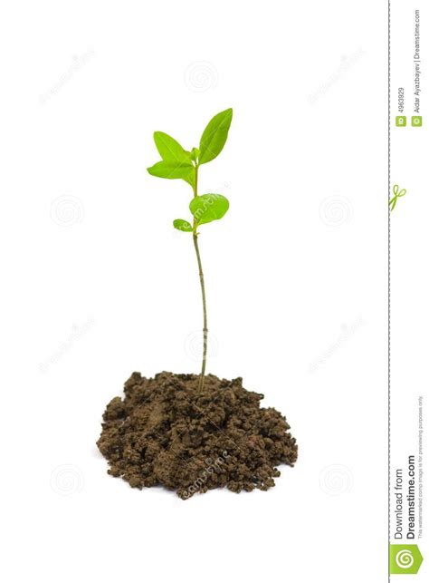 small plant small plant royalty free stock images image 4963929