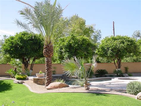 Trees For Backyard Landscaping by Trimming Irrigation Tree Removal Maintenance Las