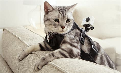mi chat con camara xiaomi s action cam bests a gopro hero for half the price