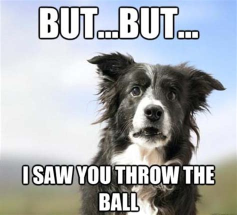 Confused Dog Meme - the old fake throw trick