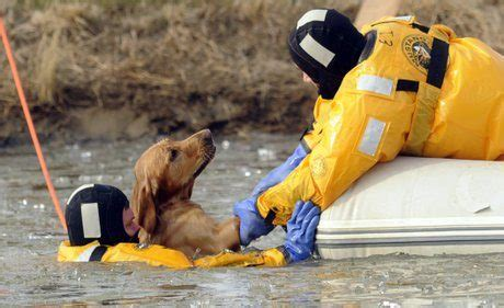 boat dog ringtone heartwarming photos of firefighters rescuing animals