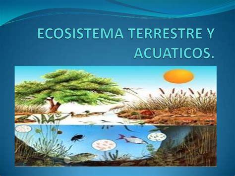 100 ejemplos de animales terrestres y acuticos ecosistema terrestre y acu 225 ticos