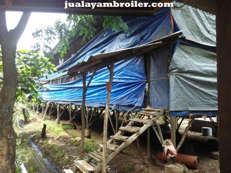 Jual Bibit Ayam Potong Makassar jual ayam broiler di makasar jakarta timur jual ayam broiler