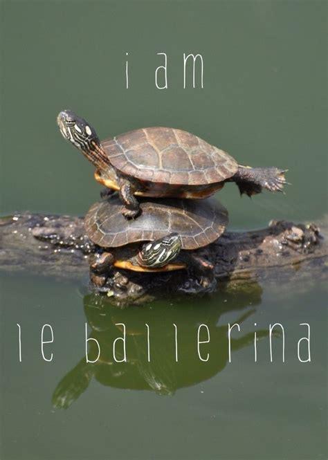 25 best ideas about tortoise on tortoise
