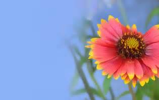 win with flower desktop wallpapers 10 free hd flower wallpaper for windows8