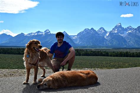 with dogs visiting grand teton national park with dogs