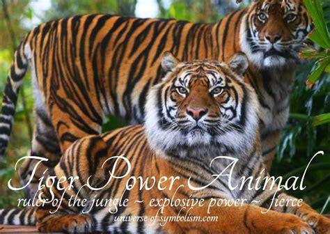 tiger symbolism tiger meaning tiger spirit totem animal