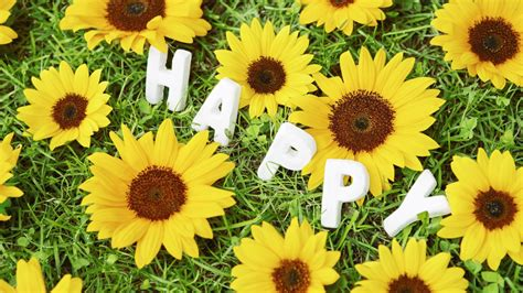 happy images happy sunflowers wallpaper allwallpaper in 16018 pc en