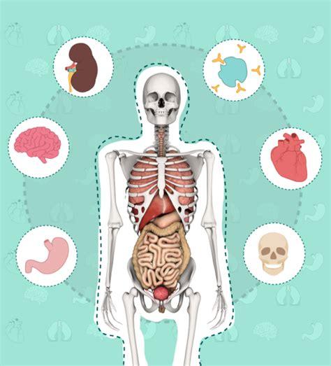 imagenes asombrosas del cuerpo humano sistemas del cuerpo humano para ni 241 os 80 im 225 genes e