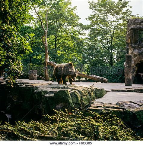 Zoologischer Garten Berlin Germany by Berlin Zoological Garden Stock Photos Berlin Zoological