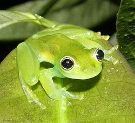 imagenes de la rana kawaii ranking de las ranas m 193 s bonitas listas en