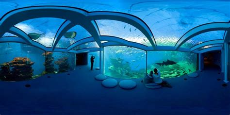 Aquarium Design palma aquarium tourist attraction