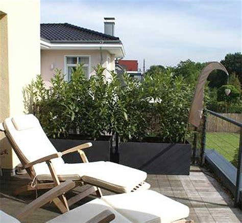 Balkon Sichtschutz Pflanzen Winterhart by Sichtschutz Mit Pflanzk 252 Beln Im Garten Auf Balkon Und