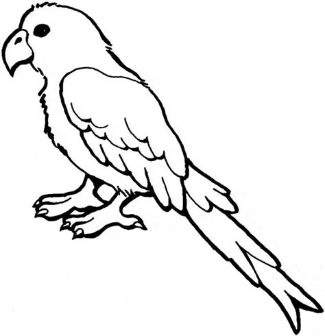 Grey Pages Lookup Grey Parrot Coloring Page Animals Town Animal