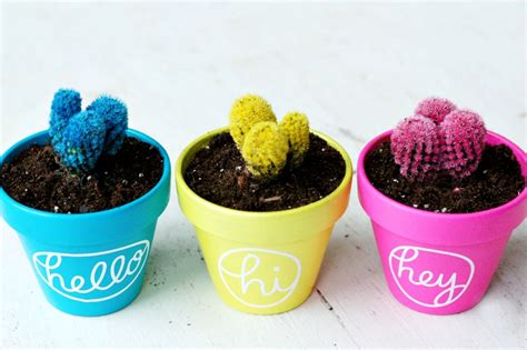 vasi per cactus vasi terracotta tante idee originali per realizzare
