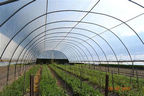 Harga Plastik Uv 4 Meter plastik uv lebar 4m per meter purie garden
