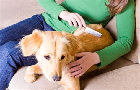 best flea medication for dogs 7 ways to reduce your s risk of cancer urdogs