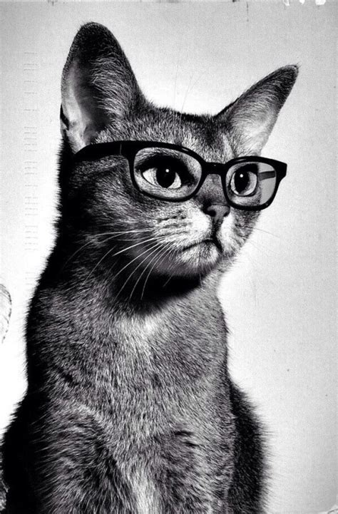 hipster tumblr oh lindo pinterest kitty cats hipster cats tumblr www imgkid com the image kid has it