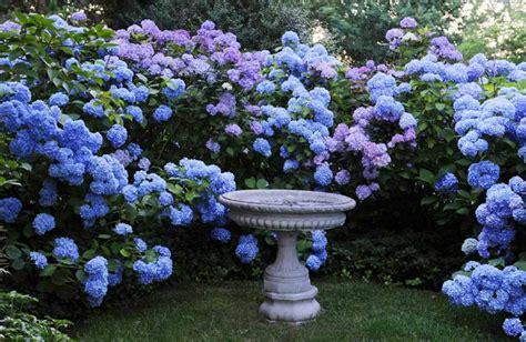 garden ideas with hydrangeas native home garden design