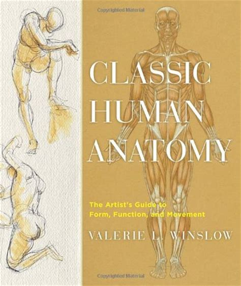 anatomy picture book best how to sketch and draw books parka blogs