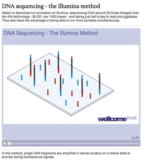 illumina sequencing animation discovering dna dna stories