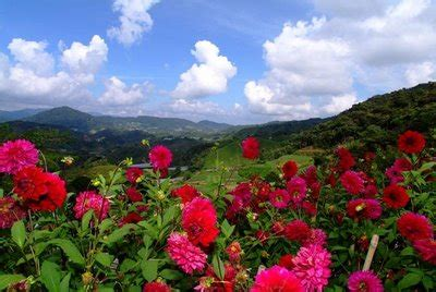 suteramb services package cameron highland