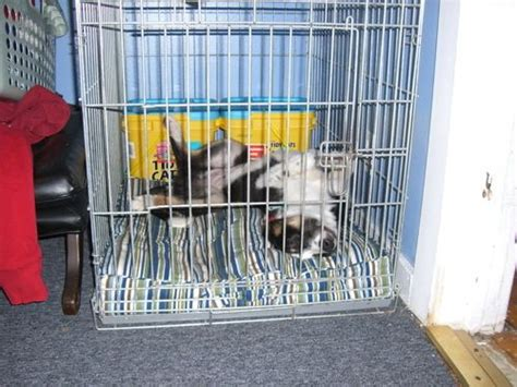 housebreaking a pug how to housebreak a puppy the basics of crate soon soon could come