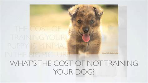 how much does a puppy eat puppy tips how much does puppy cost