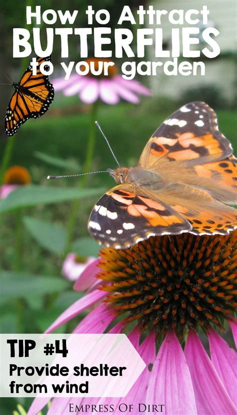 How To Attract Butterflies To Your Backyard by How To Attract Butterflies To Your Garden Gardens The O