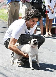 dixie pugs 1000 images about pugs with on pug gerard butler and