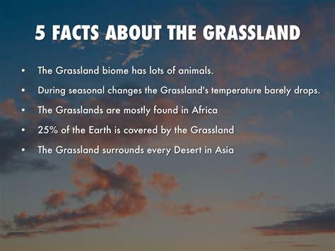grassland by jaylinmixon