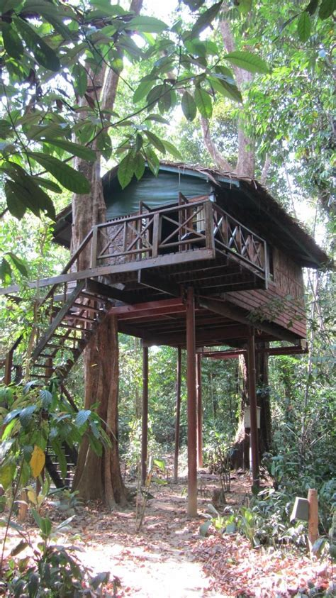 best 25 jungle house ideas on tree house