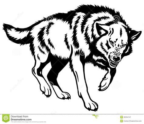 imagenes en blanco y negro de un lobo blanco negro del lobo fotograf 237 a de archivo libre de