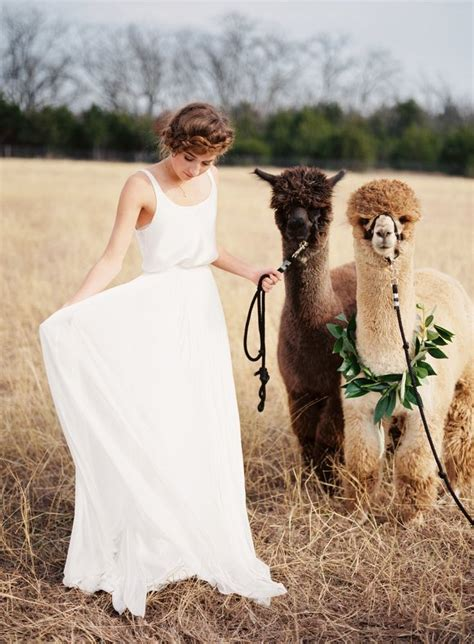 texas wedding inspiration   alpaca farm modwedding