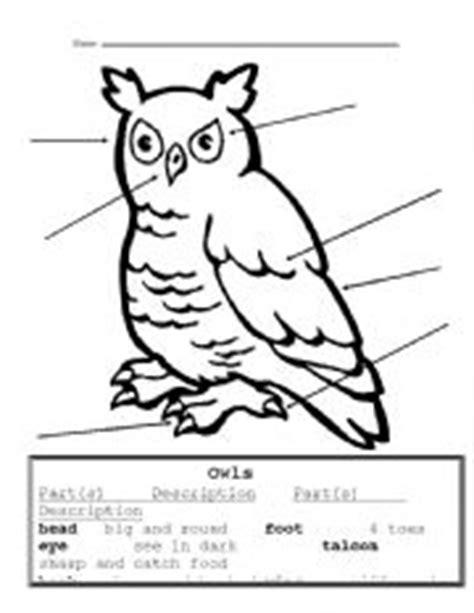 free printable owl worksheets english worksheets owl parts