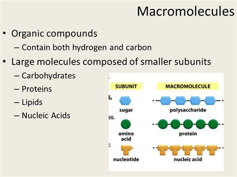 carbohydrates subunit macromolecules organic compounds ppt