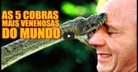 cobras mais venenosas  mundo
