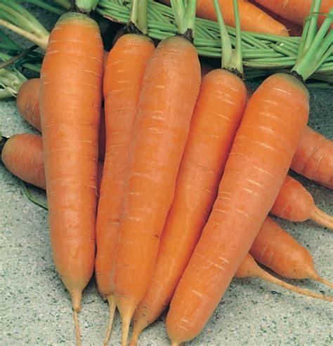 Benih Tanaman Wortel benih wortel st valery jual tanaman hias
