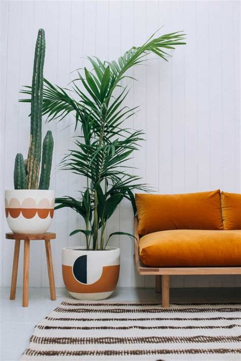where to buy large house plants 32 beautiful indoor house plants that are also easy to maintain