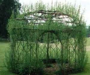willow gazebo willow gazebo grow pinterest gazebo