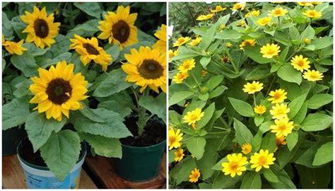 jual bibit bunga tanaman hias impor lokal unggul